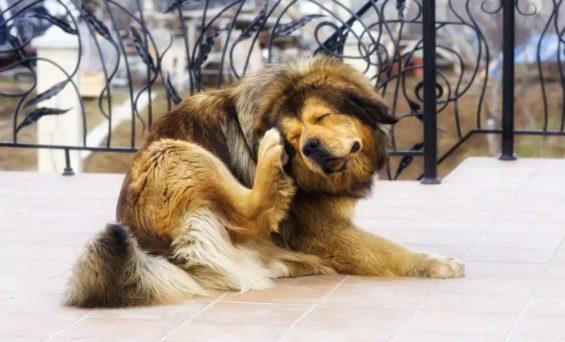 Come mi accorgo se il mio cane o gatto ha i parassiti?
