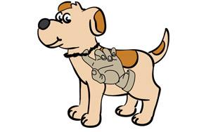 Come misurare il tuo cane o gatto